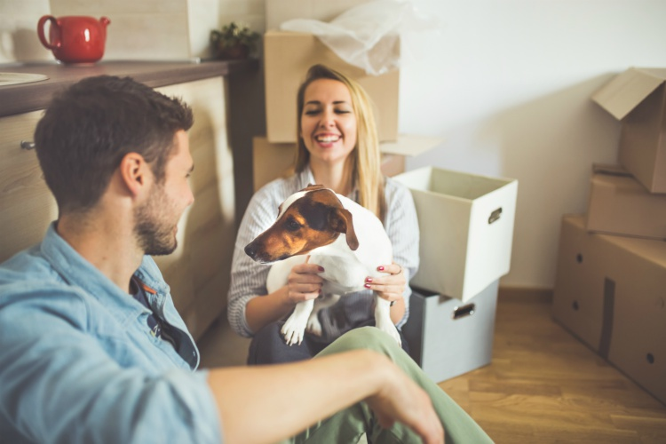 Should you make your new rental property pet friendly - Make house pet friendly ...